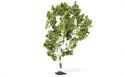 Hornby Birch Tree 11.5cm Profi