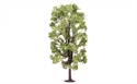Hornby Lime Tree 18.5cm Profi